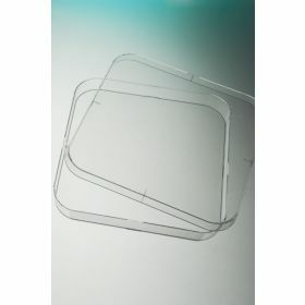 Petri dish 120x120mm square, aseptic